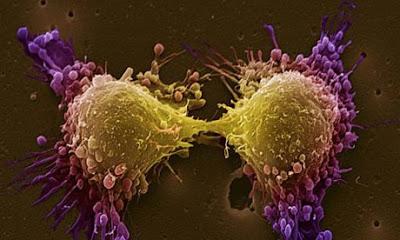 biologia_cancer