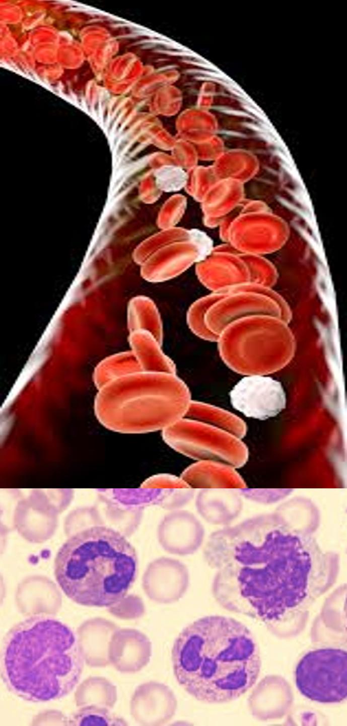 hematologia-laboratorial-e-clinica